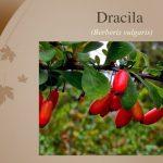 Dracilla