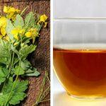 Ceaiul de ROSTOPASCĂ – tratamentul bolilor de ficat, sânge și splină